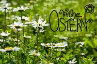 Daisy Flower Meadow, Calligraphy Frohe Ostern Means Happy Easter