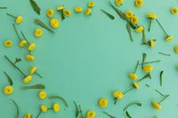 Multiple yellow flowers and leaves forming circle on green background