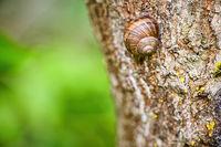 Eine Schnecke kriecht einen Baumstamm hoch