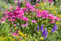 Different colorful flowers