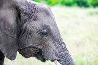 Portrait of a good elephant