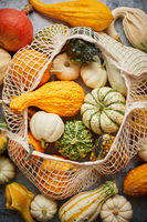 Various colorful mini pumpkins in string shopping bag. Halloween or Thanksgiving day