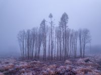 tree in deforested landscape , mystical winter