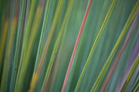 Grass tree abstract background