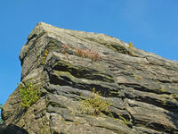 a rough grey sandstone moorland outcrop with heather and plants growing n the cracks against a blue sunlit sky