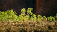 panoramic detail bushes in Australia