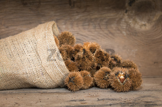 bag that spills chestnuts on rustic wood