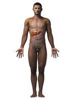 african-american anatomy