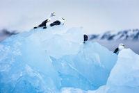 Eisberge vor Spitzbergen, Norwegen