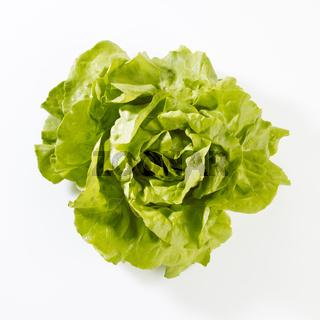 Produktaufnahme Kopfsalat auf weißem Untergrund