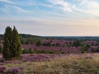 Lüneburger Heide, Blick vom Wilseder Berg