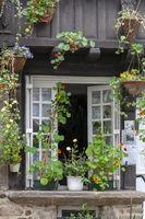 Blumengeschmücktes Fenster