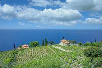 Kuestenlandschaft mit Weinberg auf der Insel Elba,Toskana,Mittelmer,Italien