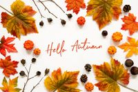 Bright Colorful Autumn Leaf Decoration, English Text Hello Autumn