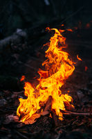 Burning wood at evening in the forest. Campfire at touristic camp at nature. Barbeque and cooking outdoor fresh air. Flame and fire sparks on dark abstract background. Concept of safety and responsibility to nature