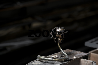 Geschmiedete Rose aus Kupfer