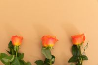 Three orange roses lying separately from bottom on orange background