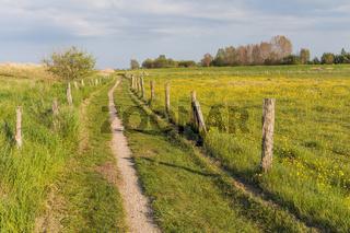 Wanderweg durch Wiesenlandschaft im Frühling