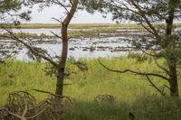 Naturschutzgebiet bei Darss in Deutschland mit Wiesen, Schilf,Wasser und Enten