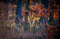 Herbststimmung mit buntem Laub und leuchtenden Gräsern