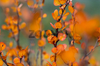 Herbst in Kanada, Rocky Mountains