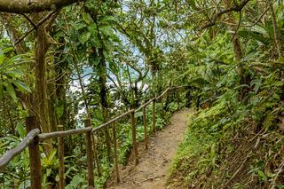 Path through the dense vegetation of the Atlantic forest