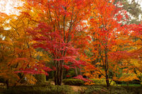 The trees ablaze in colours of Autumn