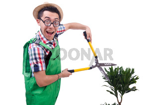 Funny man trimming plans in his garden