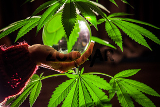Crystal ball studio shoot with cannabis leaves