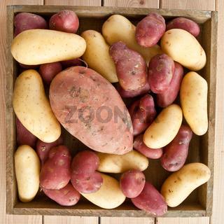Verschiedene Kartoffelsorten