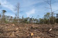 Sturmschäden und Trockenschäden im Wald