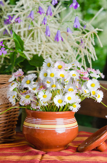 Beautiful daisy flowers, close-up. Summer background
