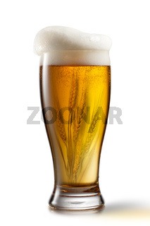 Beer in glass and wheat inside isolated on white background