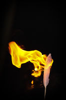 Feather and Flame #6