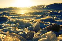 Young Toros. Ice Shine in the sun like jewels.