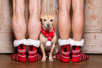 christmas santa claus dog with owners