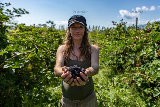 woman in you pick blackberries farm