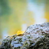 Autumn leaf on a rock