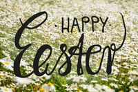 Sunny White Daisy Flower Meadow, Calligraphy Happy Easter