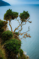 Tree on Devon Coastline