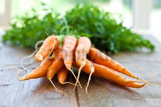 Frische Karotten mit Gruen