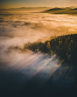 Forest Aerial View with Autumn fog between the trees.