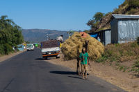 Camel carrying hay, Ethiopia