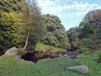 a grass covered woodland clearing surrounded by trees with stepping stones crossing a small river know as colden water in the colden valley in west yorkshire