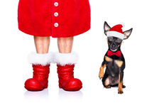 merry christmas dog  santa claus hat