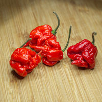 Carolina Reaper, the hottest chile pepper (Capsicum chinense ), whole ripe pod, on wooden background. Superhot or extremely hot chile pepper
