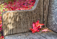 Red Leaves on Bench