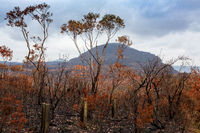 After bush fires in Australia