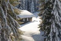 Old wooden snowy ski cabin hidden behind Trees in the Alps near Hauchenberg Diepholz. Allgau, Bavaria, Germany.