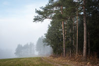 Edge of a forest with fog in the distance in lower austria
